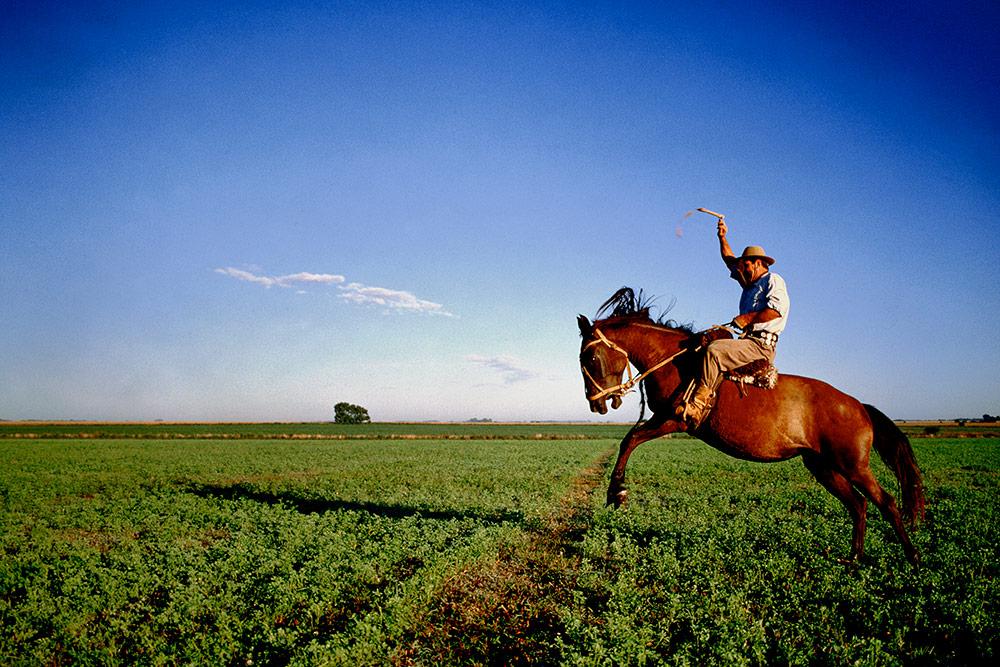 Gaucho on horseback, Argentina