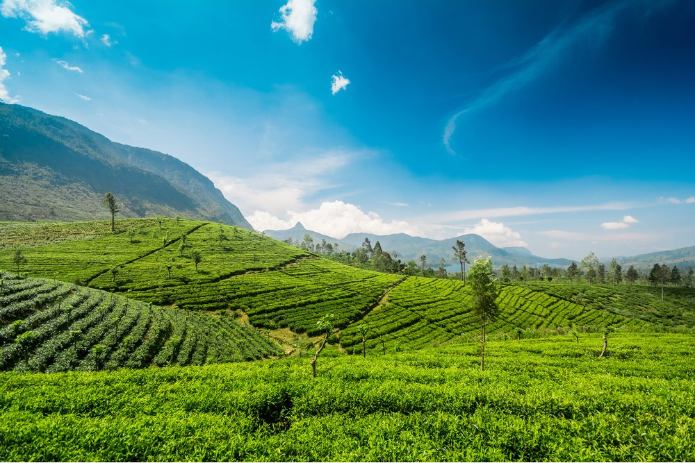 Adams peak also known as Sri pada in Sri Lanka over the Maskeliya reservoir and tea plantations