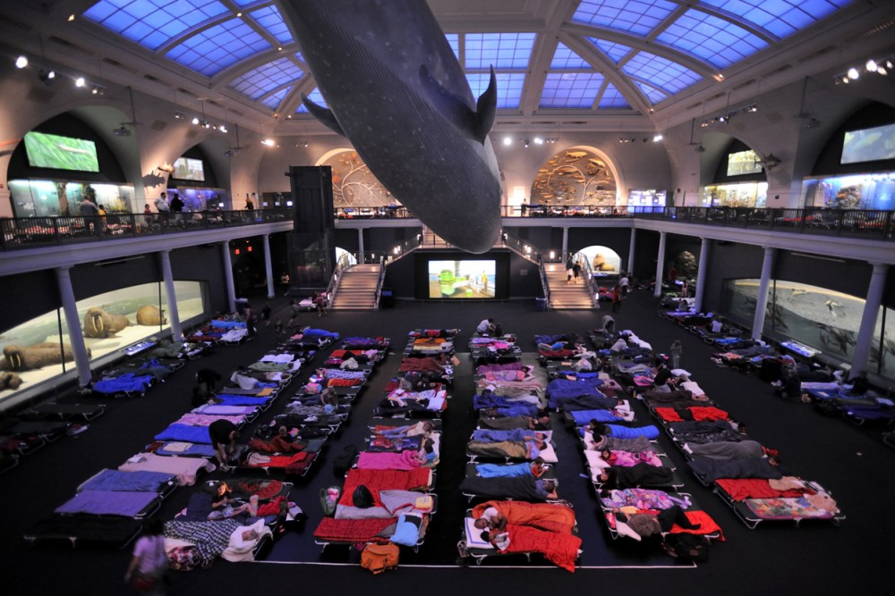 Museum Of Natural History Night At The Museum Sleepover