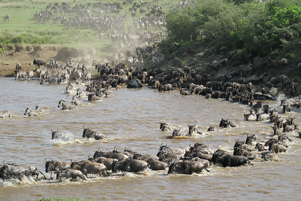Great Migration, Mara River, Kenya
