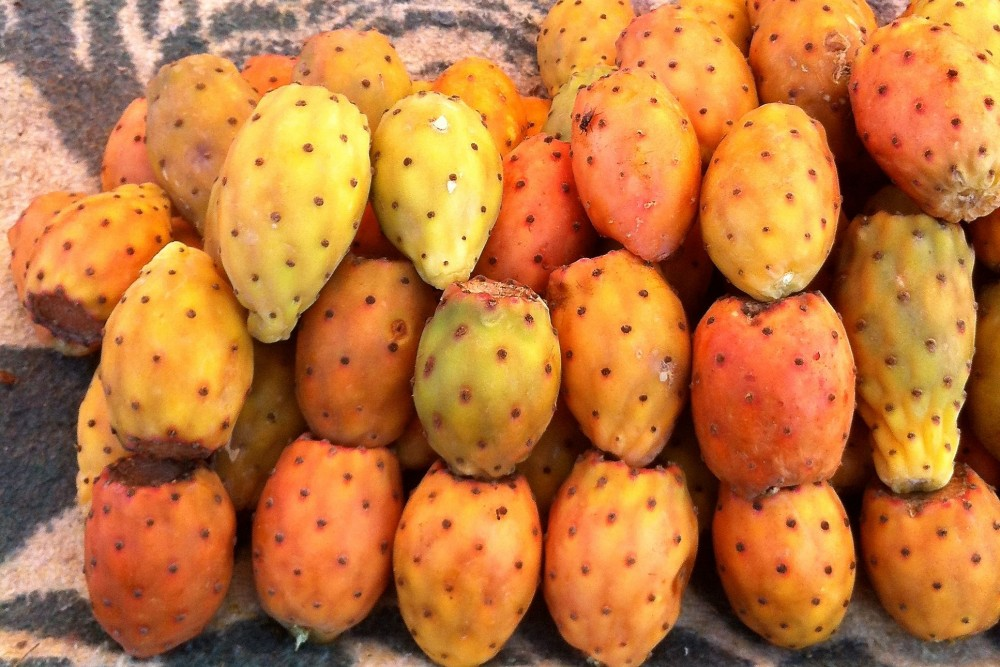 prickly pears Marrakech