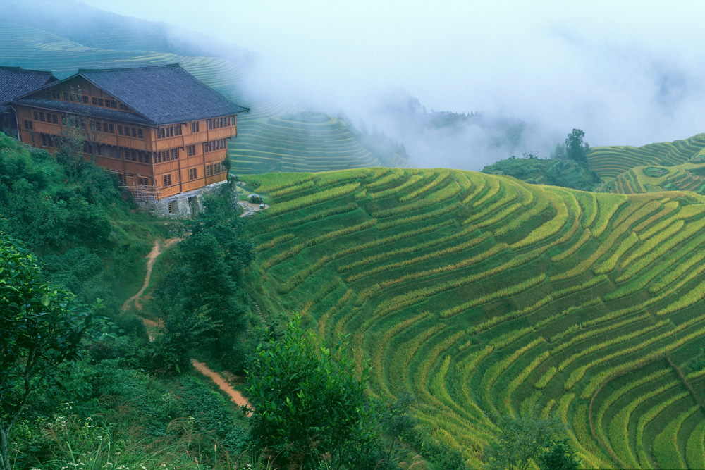 Dragonback Rice Terraces, Guangxi, China