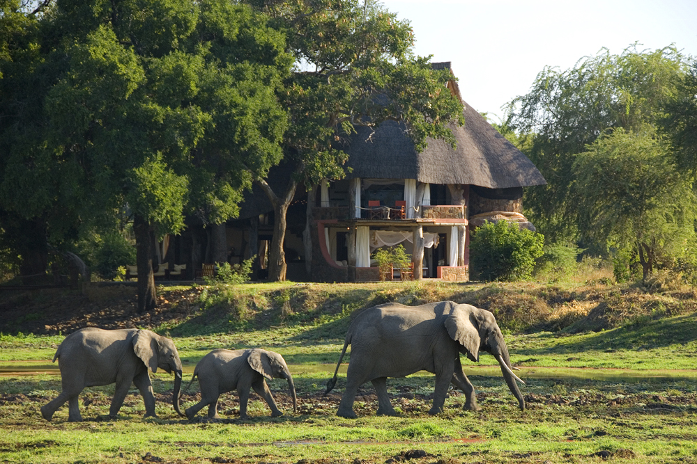 Elephants, Luangwa Safari house, Zambia