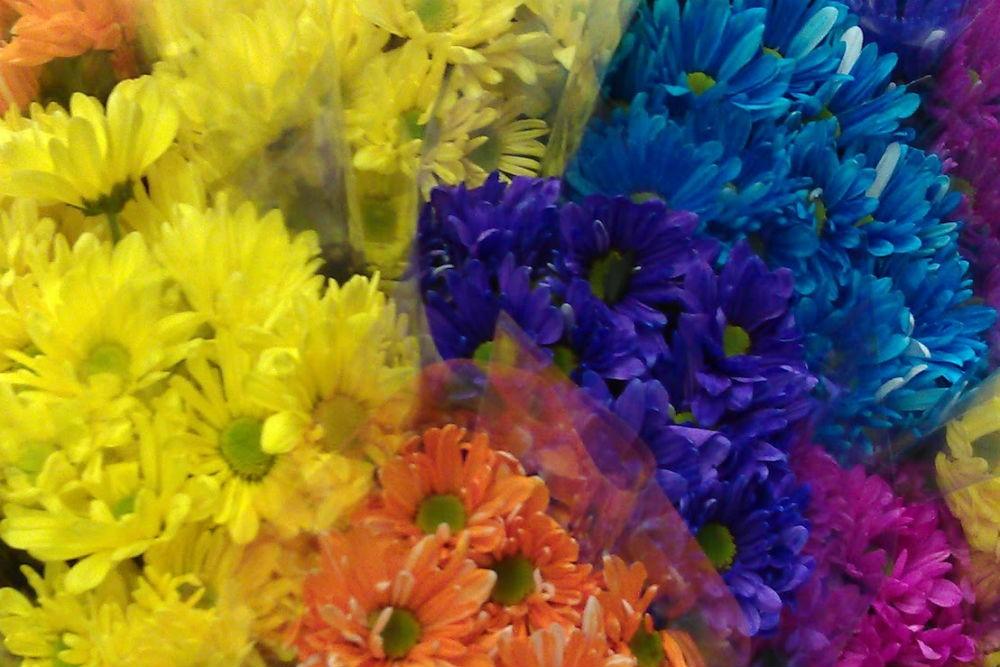Not all flowers make good gifts—check local customs. Photo: Billie Cohen