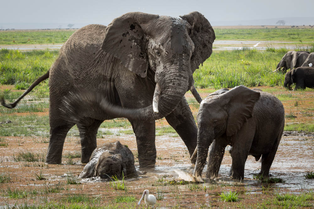 elephants at water hole safari Photo by Susan Portnoy