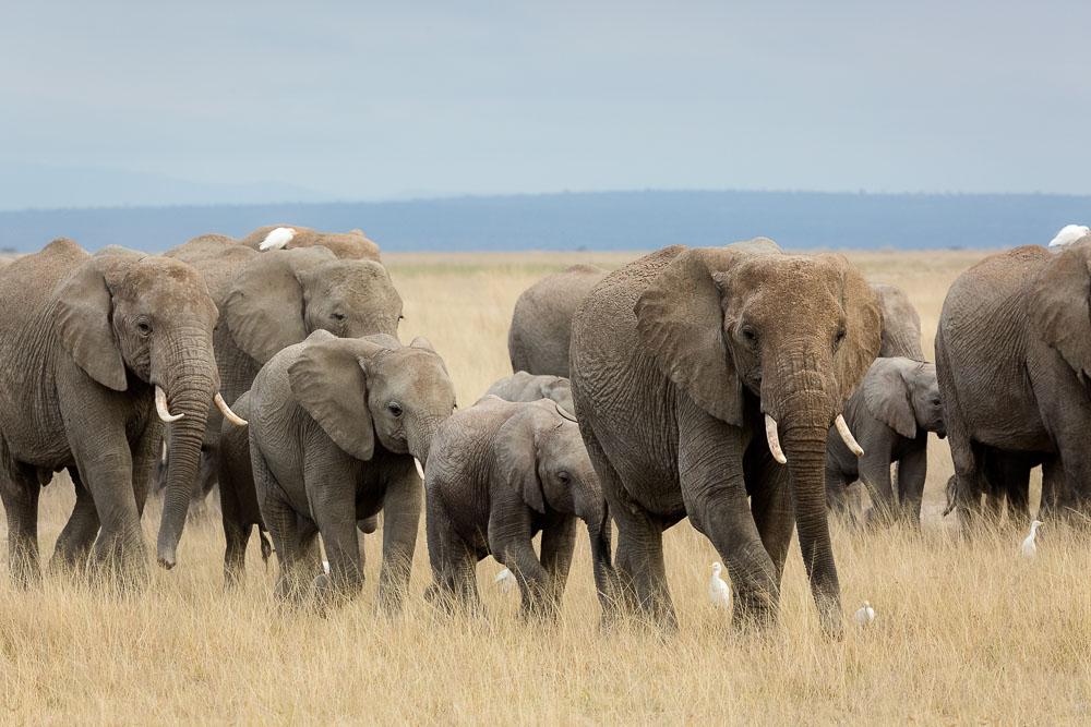 Safari in Kenya Photo by Susan Portnoy