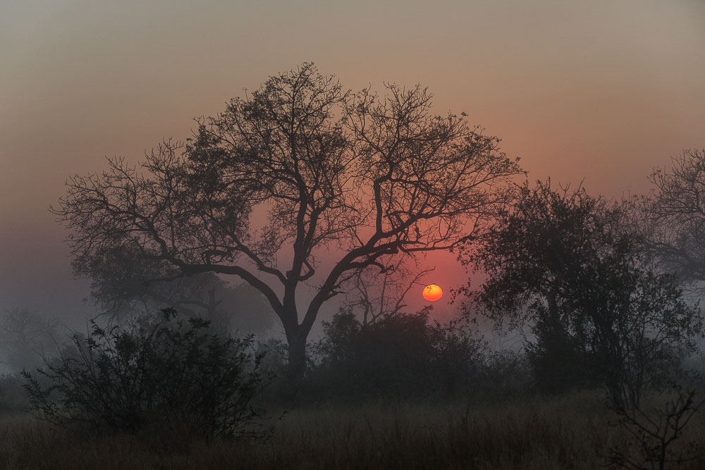 South Africa sunrise Photo by Susan Portnoy