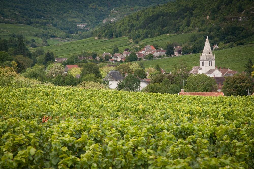 Burgundy's rolling hillsides