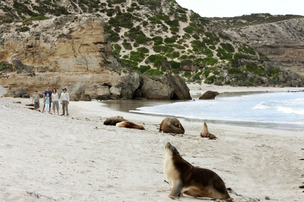 Seal Bay, Kangaroo Island, Great Barrier Reef, Australi