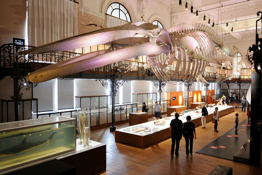 The Oceanographic Museum of Monaco's exhibition on sharks.
