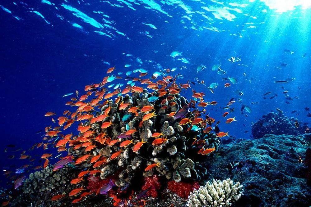 Snorkeling From Beach Likuliku Island Fiji Day Trip