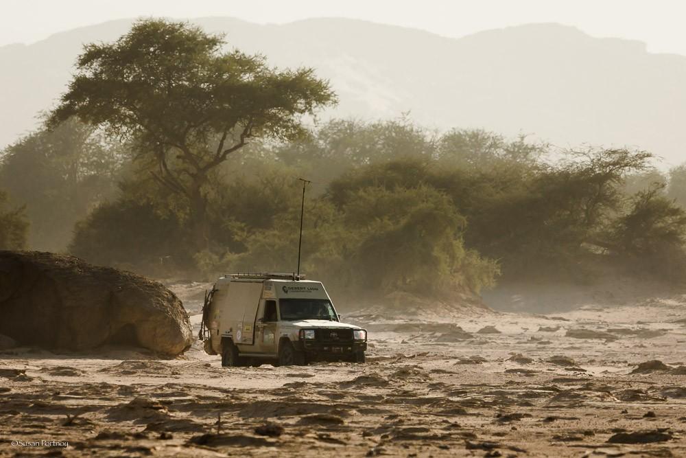 nambia desert lions Flip Stander Photo by Susan Portnoy