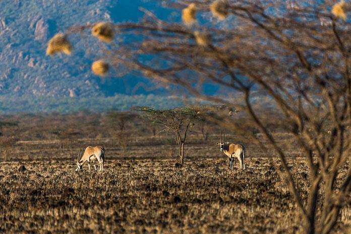 Northern Frontier, Kenya, Africa Photo by Susan Portnoy