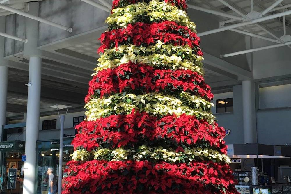 The holidays are almost here at Charlotte Douglas International Airport. Photo: CLT/Instagram