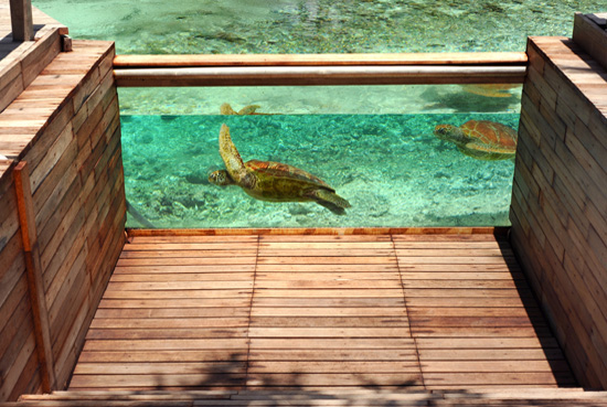 The Turtle Center at Le Meridien Bora Bora