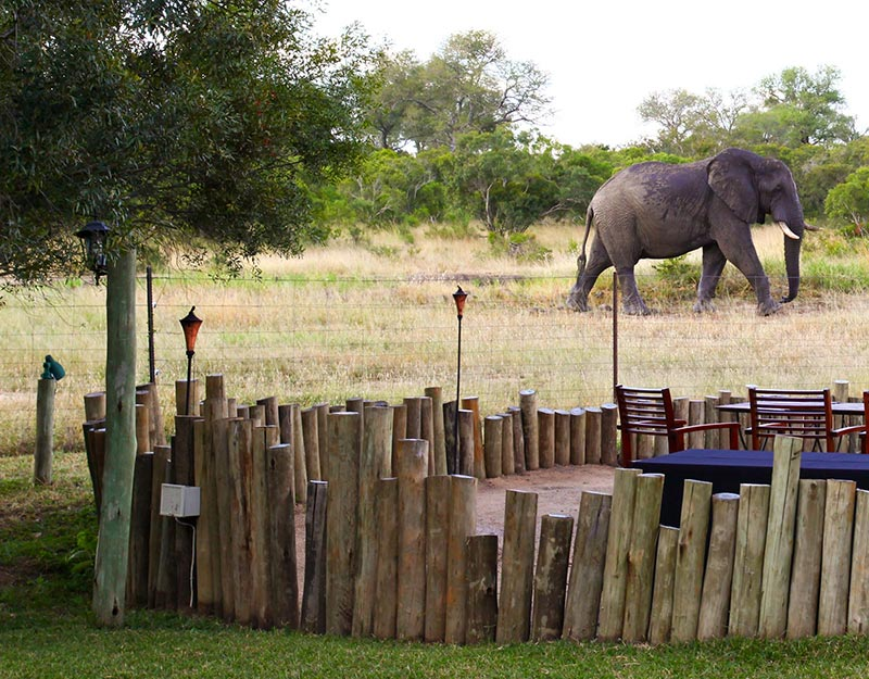 Tintswalo Safari Lodge, South Africa