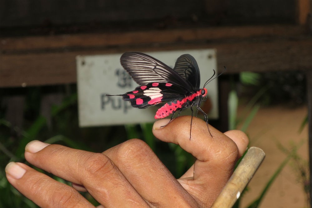 Banteay Srey Butterfly Centre, Siem Reap Cambodia