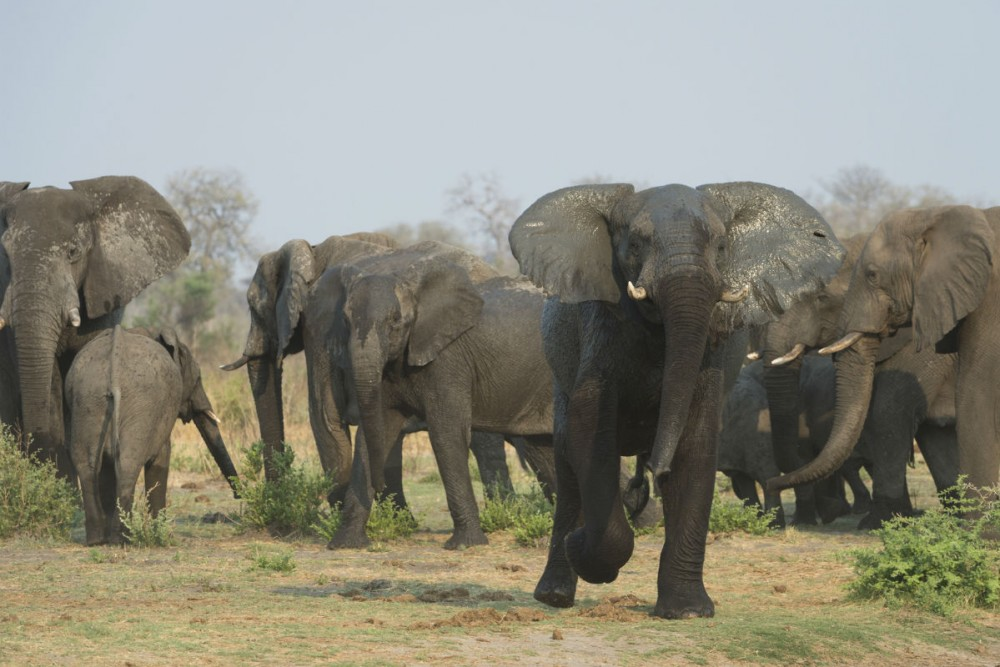 Elephants at Namibia's Xaudum Lodge