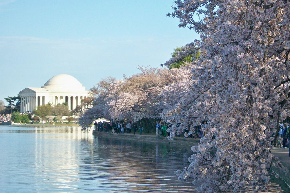 National Cherry Blossom Festival, Washington, D.C.