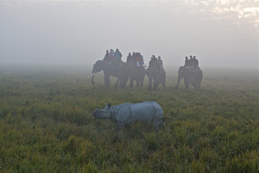 An elephant safari in Kaziranga National Park, Assam, Northeast India. Photo by: Sanjay Saxena.