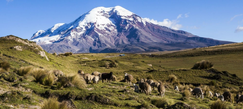 ecuador with snowy mountain, green meadow, and sheep grazing