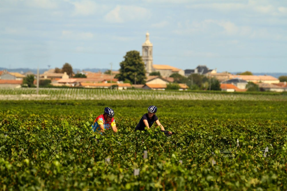 bicyclists in Bordeaux france vineyards