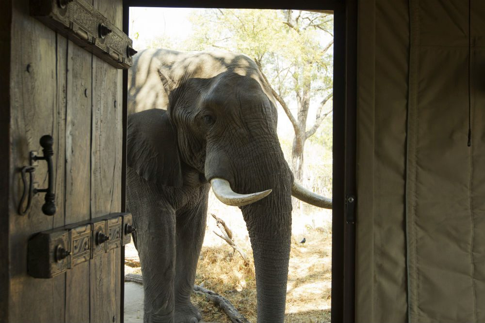 elephant in doorway of Zarafa safari camp villa