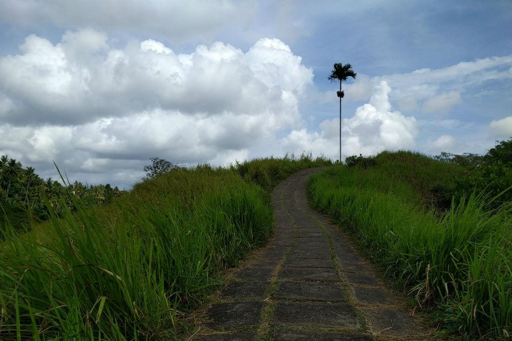 Campuhan Ridge walk in Ubud, Bali