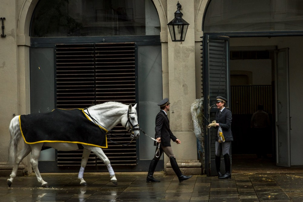 Spanish Riding School, Vienna, Austria. Photo by Susan Portnoy