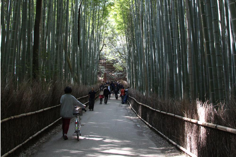 Arashiyama Bamboo, Kyoto, Japan.
