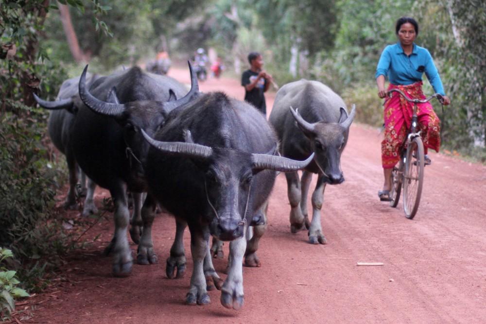 The journey to Villa Chandara, Siem Reap, Cambodia.