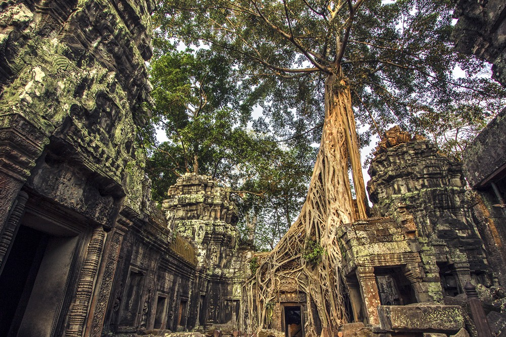Ta Prohm without crowds, Siem Reap, Cambodia