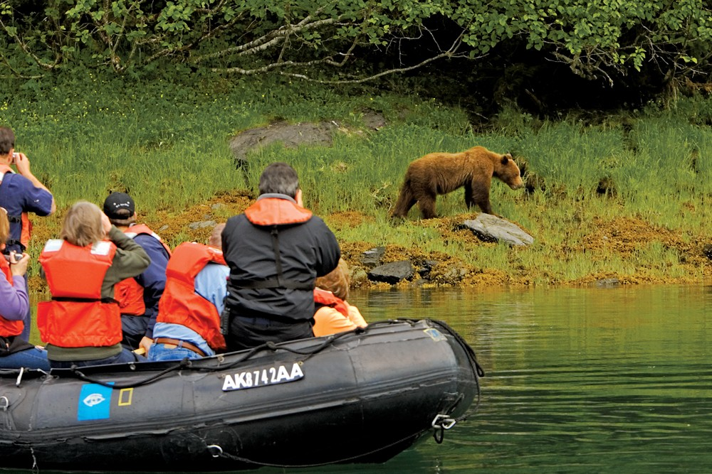Brown Bear in Kelp Bay, Alaska