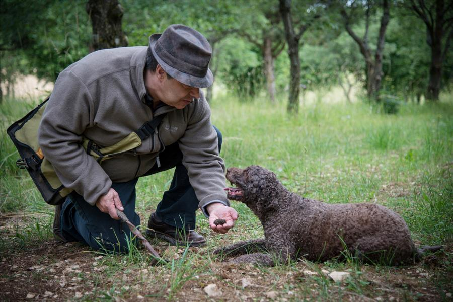 truffle hunter and his dog in France
