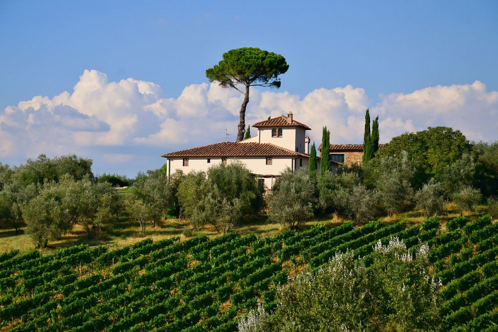 Tuscany vineyard landscape Italy