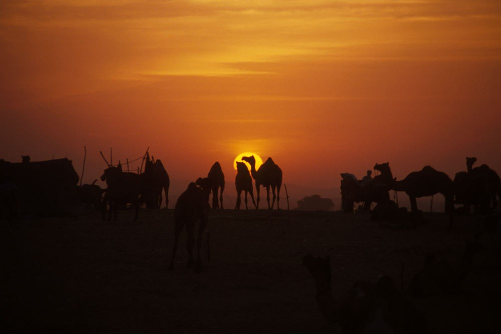 sunset at The Pushkar Camel Fair in India