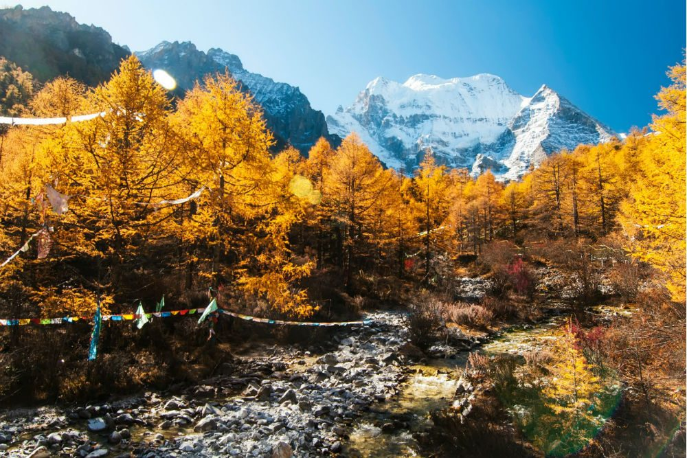 fall trees and mountain view of Yading Nature Reserve in Sichuan Province, China