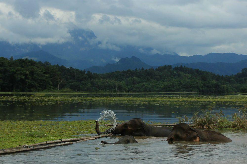 elephants bathing in river in Laos