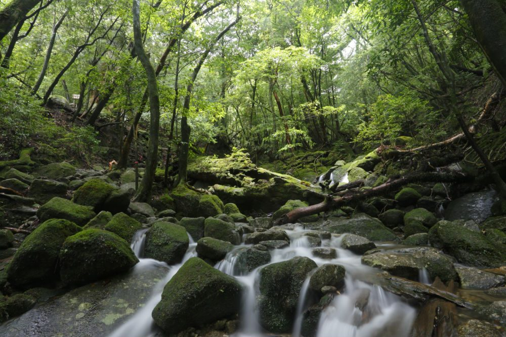 forest river in Yakushima Japan