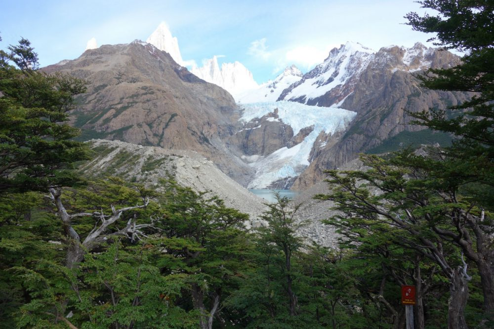 A forest of lenga trees in the foreground, Argentina's Mount Fitz Roy peeking out from the background.