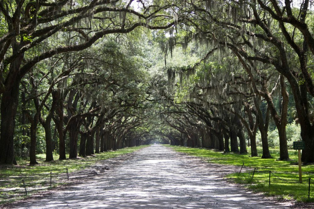 alley of trees in Savannah, Georgia