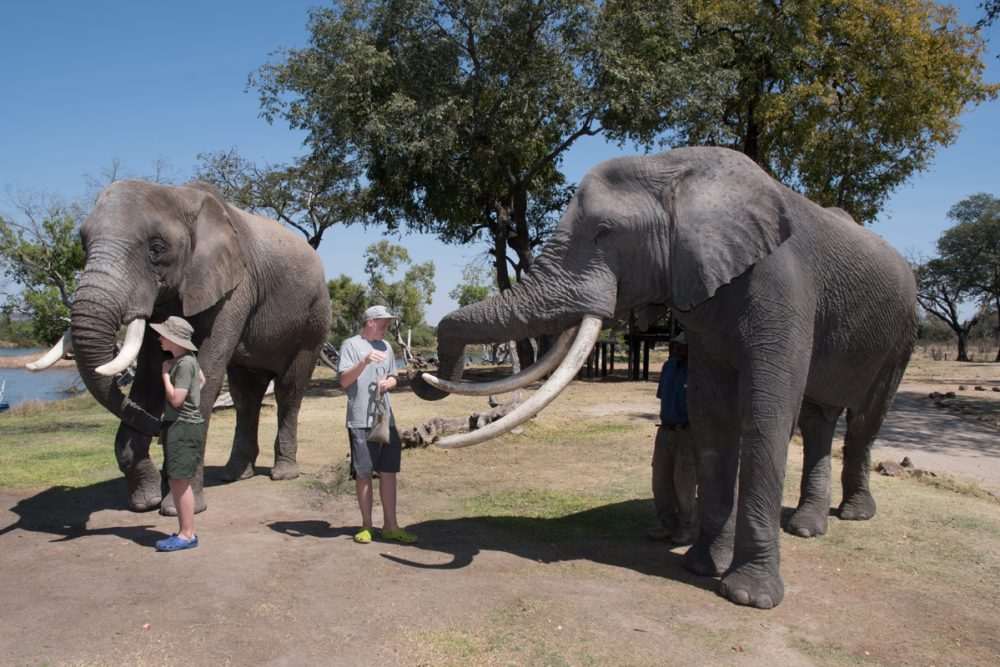 At the Elephant Café, you can feed and touch elephants.