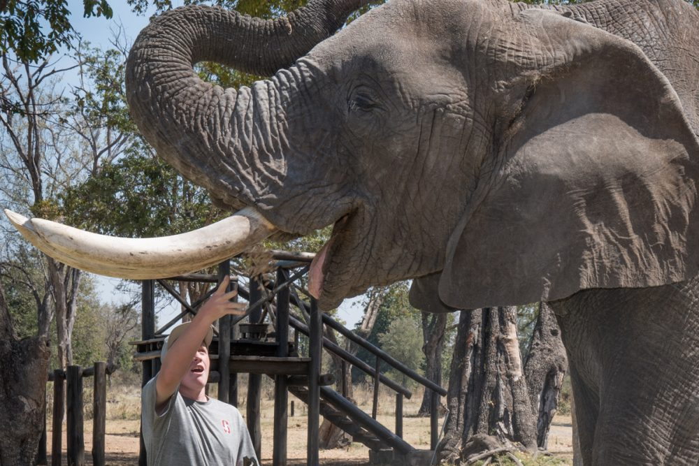 """When you say """"Trunk up,"""" the elephant will raise its trunk so you can feed it by mouth instead."""