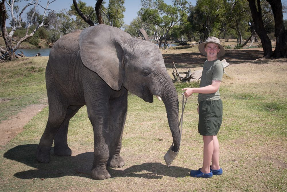 At the Elephant Café, they give you bags of pellets to feed the elephants. Doug took a shortcut.