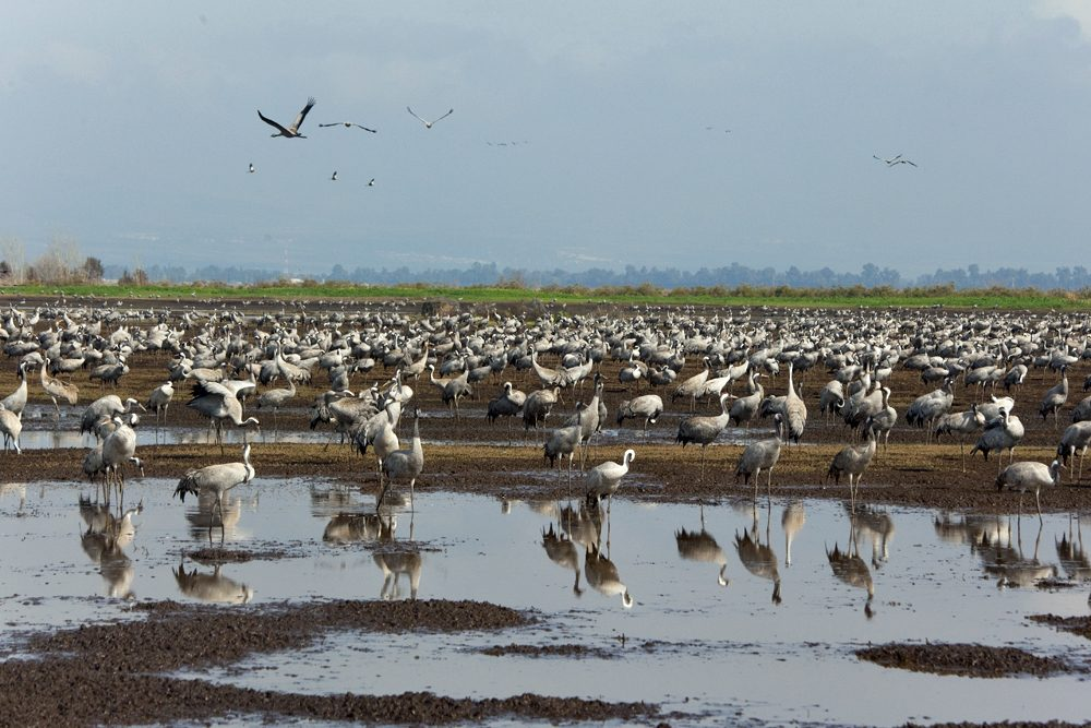 bird migration in Israel