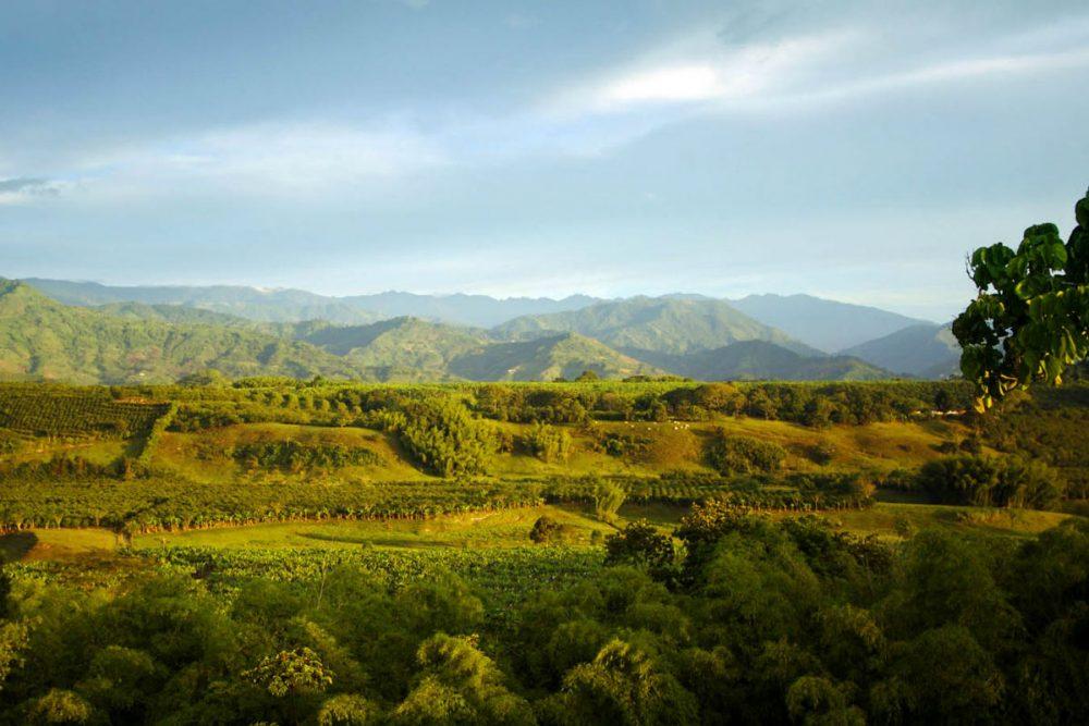 landscape of coffee region in Colombia