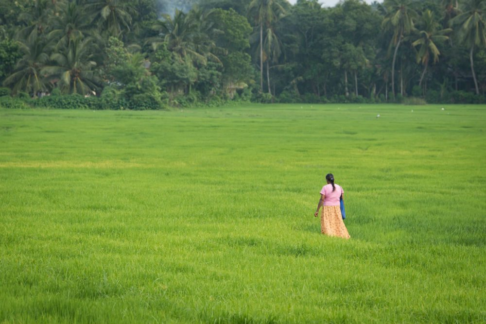 woman standing alone in Sri Lanka green rice field