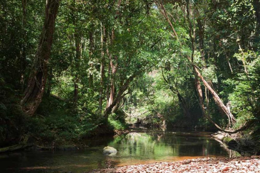 Borneo. Photo: Wild Frontiers