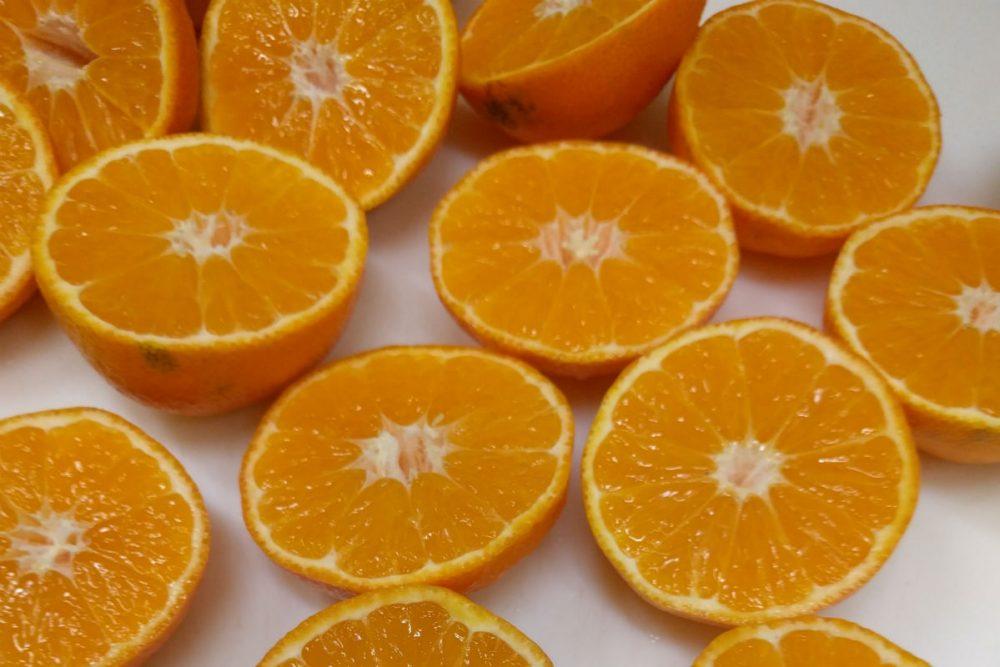 clementine oranges Amandola Gelateria Foligno Italy