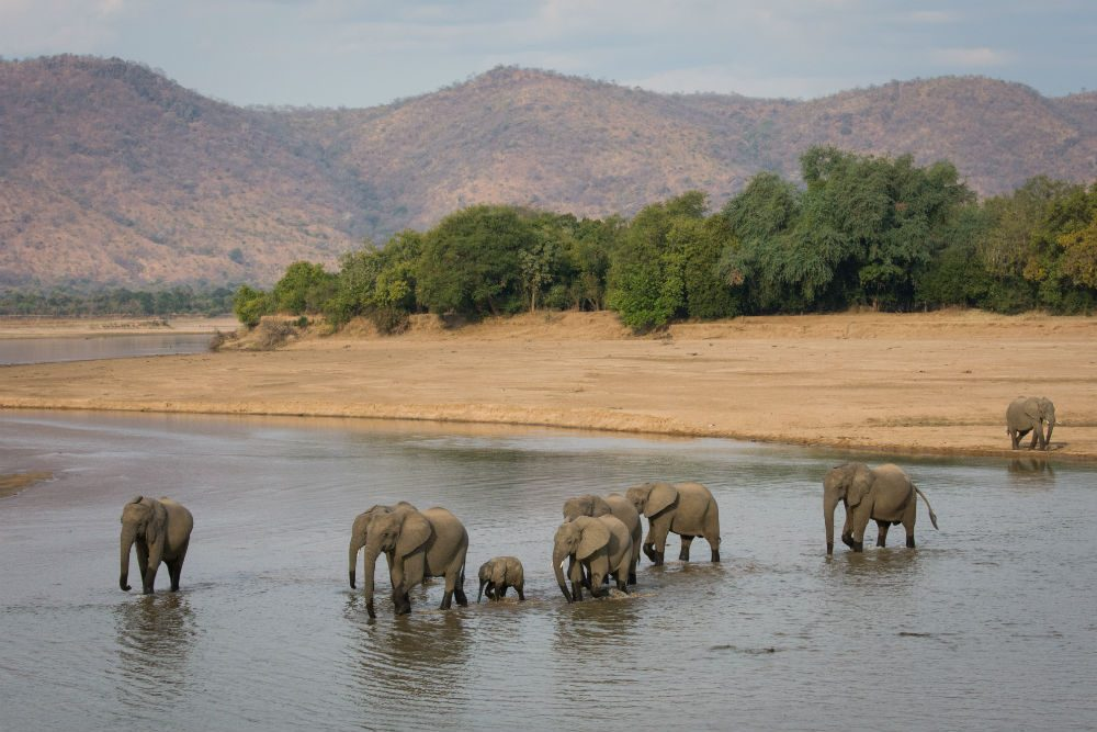 elephants in a water hole on an African safari